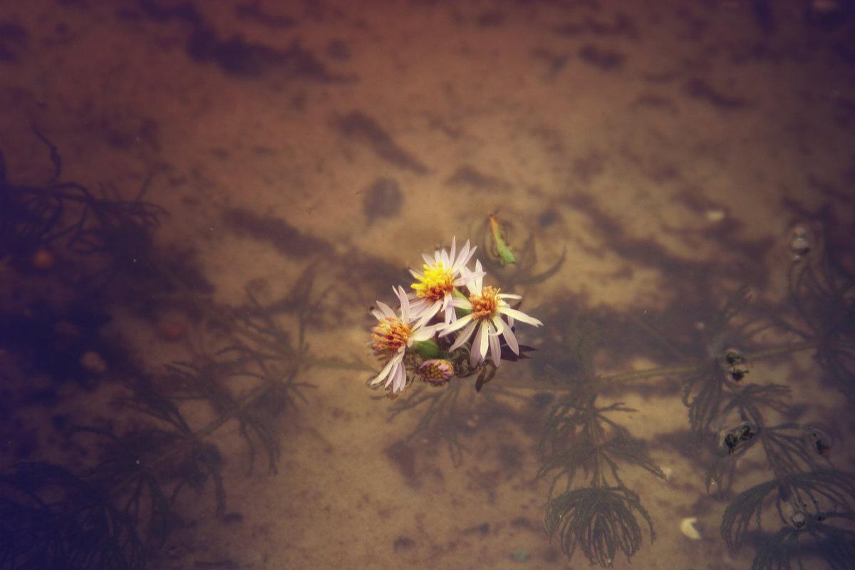 цветы жизни - Любовь Потравных