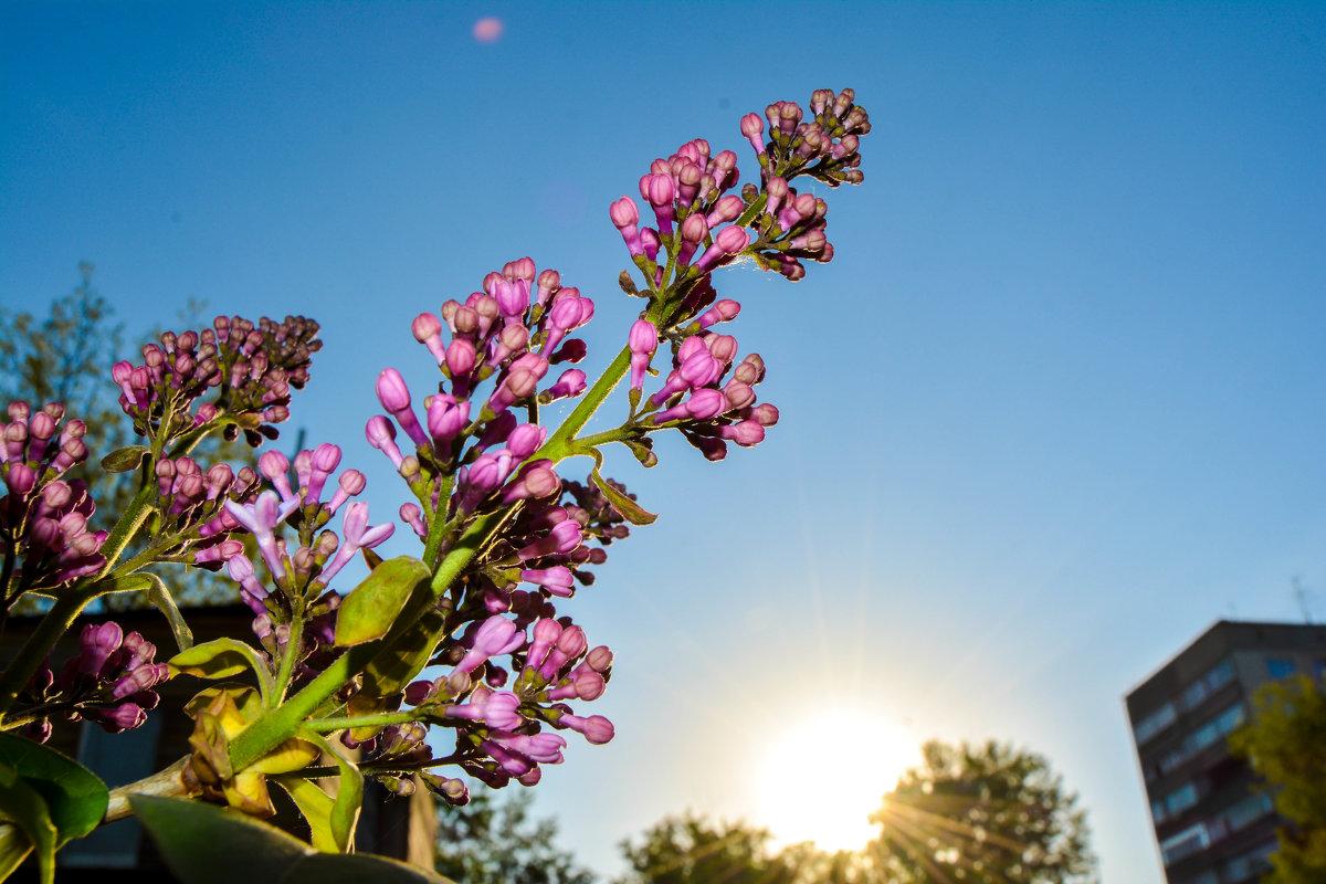 Скучаю по весне - Света Кондрашова