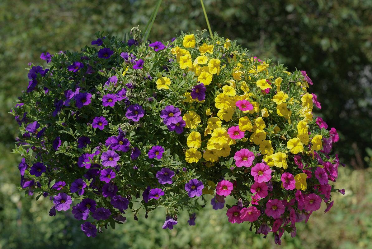 Цветы лета - Ольга