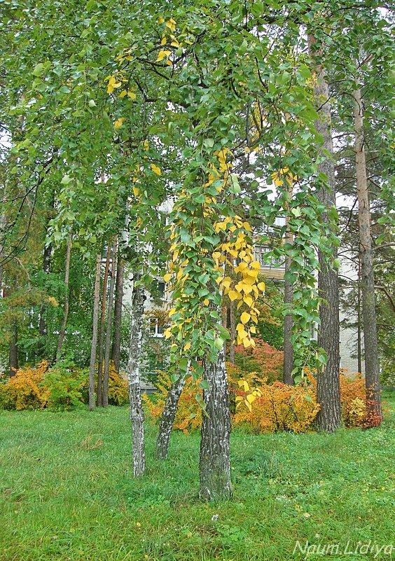 Грустная осень - Лидия (naum.lidiya)