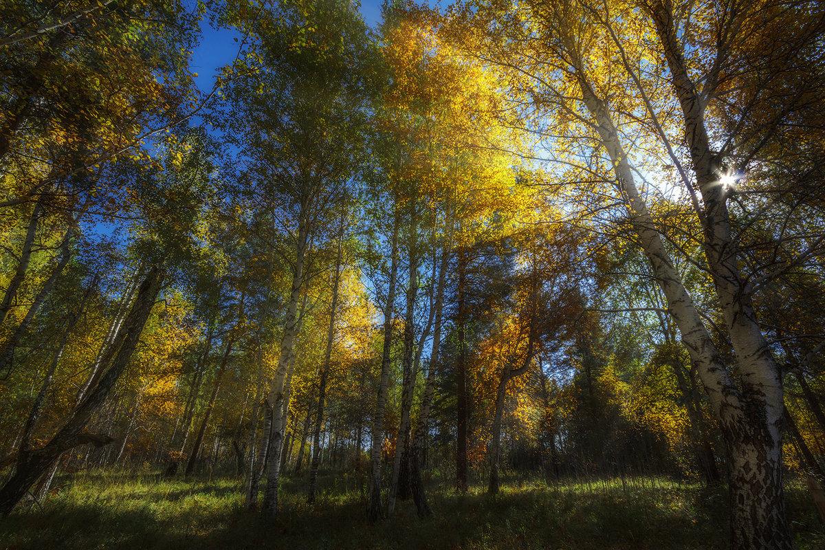 осени пожар - Андрей Афонасьев