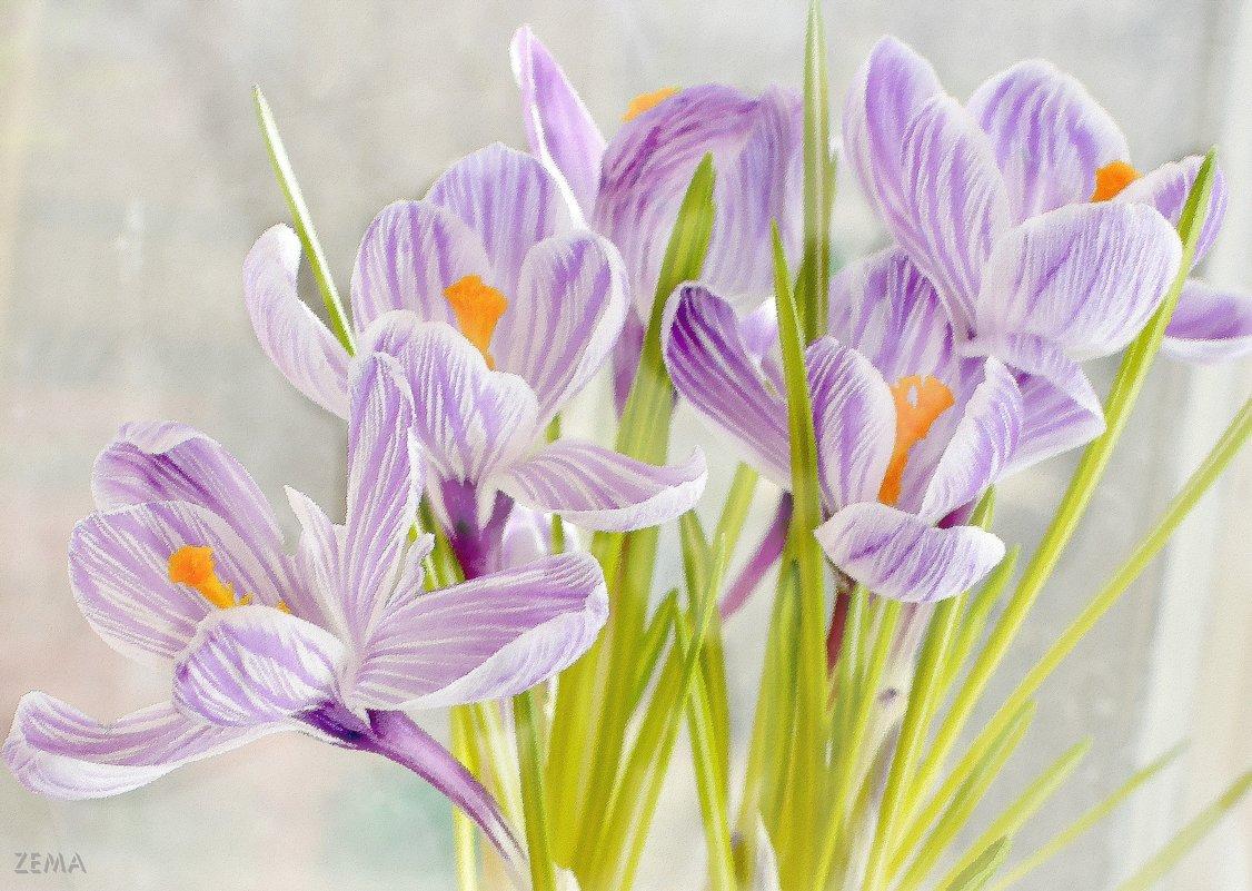 Весенний цвет - Татьяна Зема