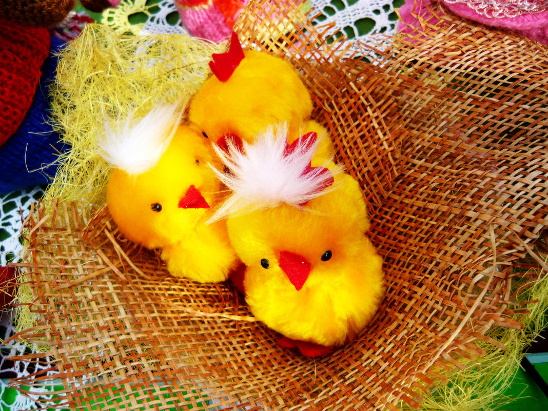 Цыплятки - Надежда