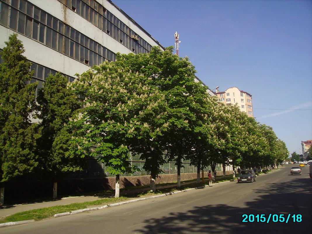 Весна  в  Ивано - Франковске - Андрей  Васильевич Коляскин