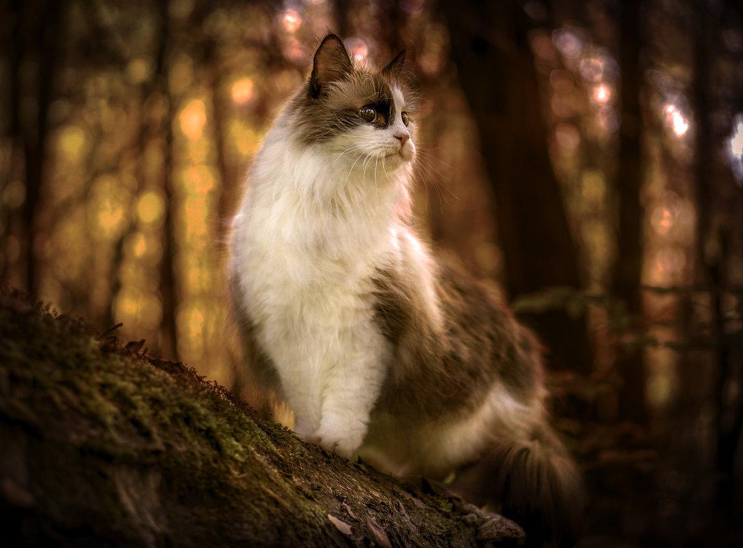 Кот в лесу - Алексей Строганов