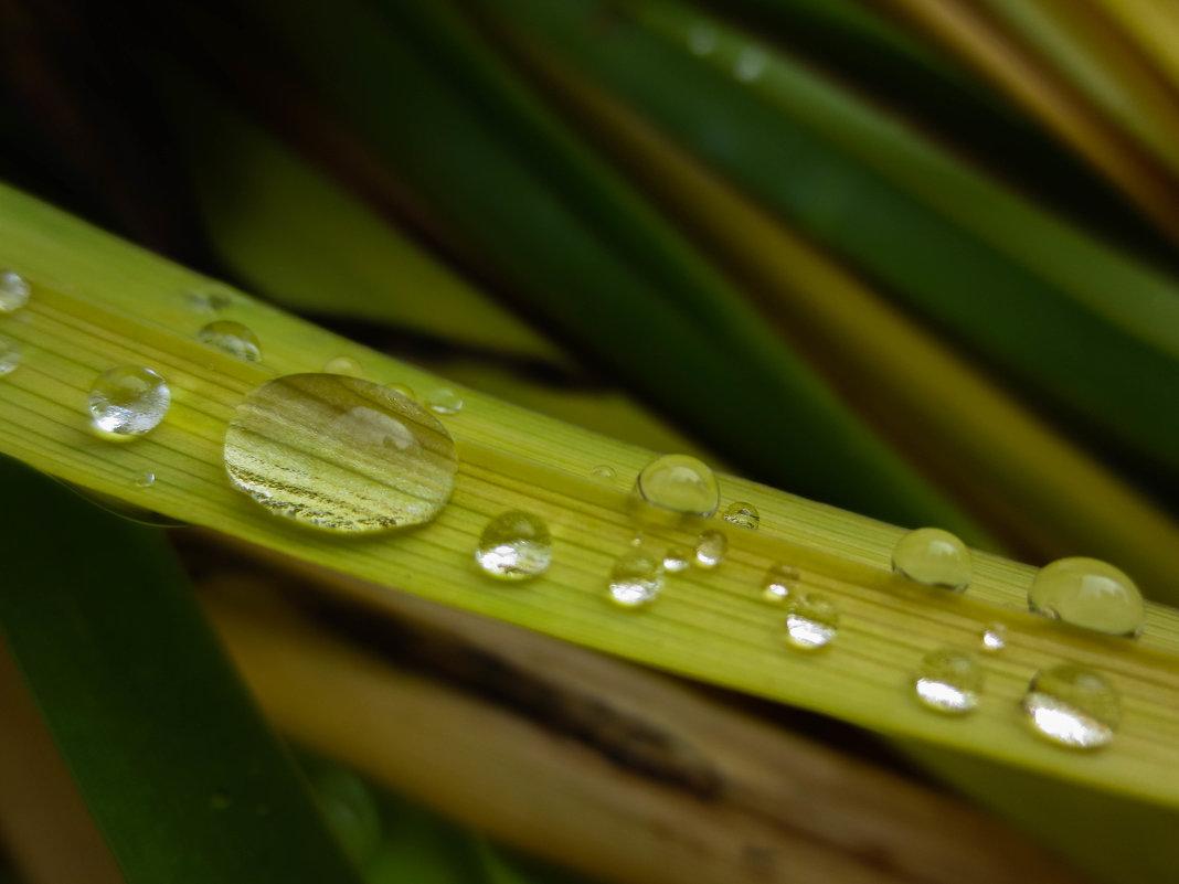 капли дождя - Александра Тетерина