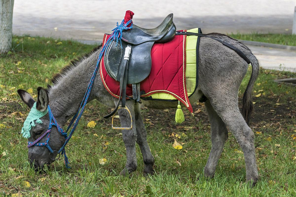 А пони тоже кони - Игорь Сикорский