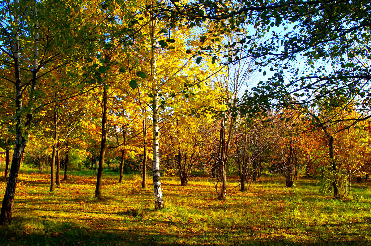 Солнечный денек в октябре. - Александр Атаулин