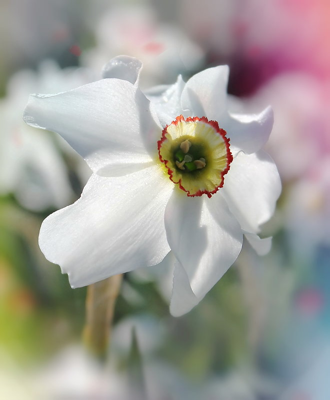 Весна - Наталия