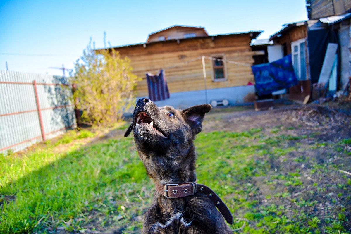 собачий прыжок - Света Кондрашова