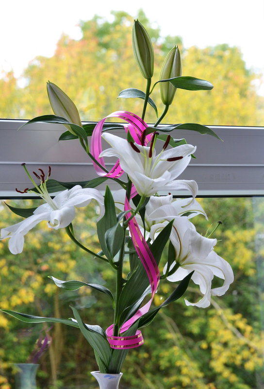 Осень за окном - Пердимонокль
