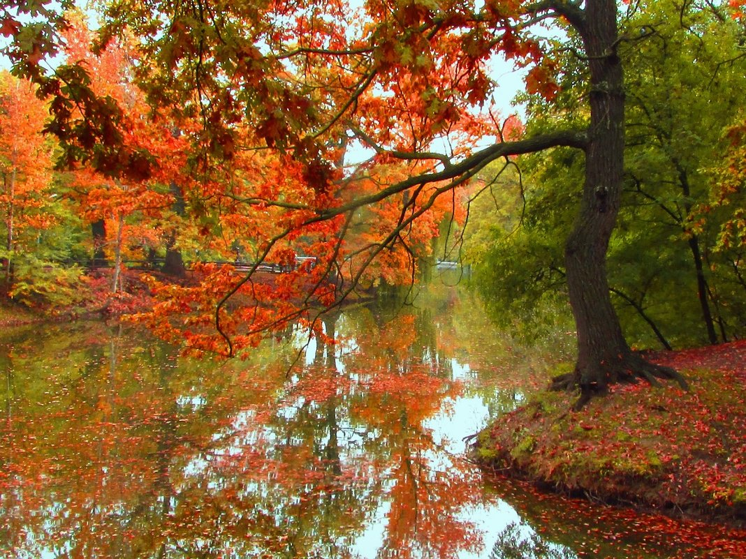 Когда приходит осень - Инна