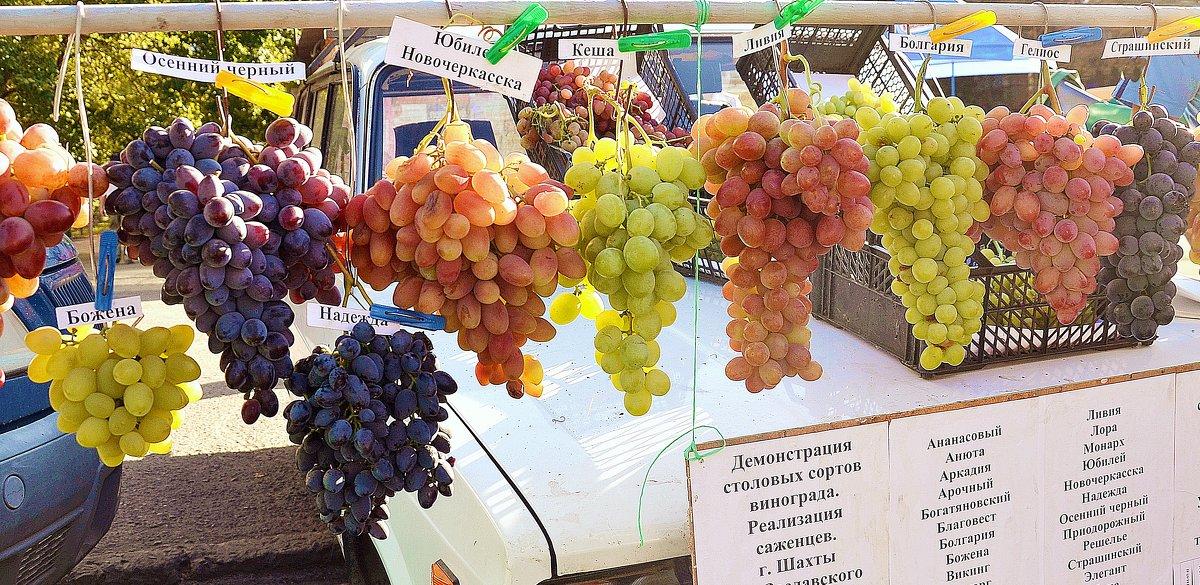Шахтинский виноград - Владимир Болдырев