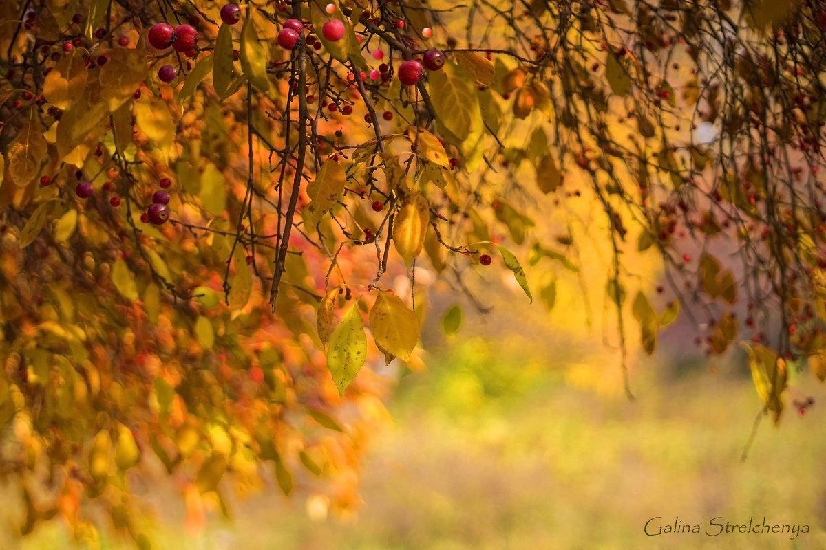 Золотая Осень... - Галина Стрельченя