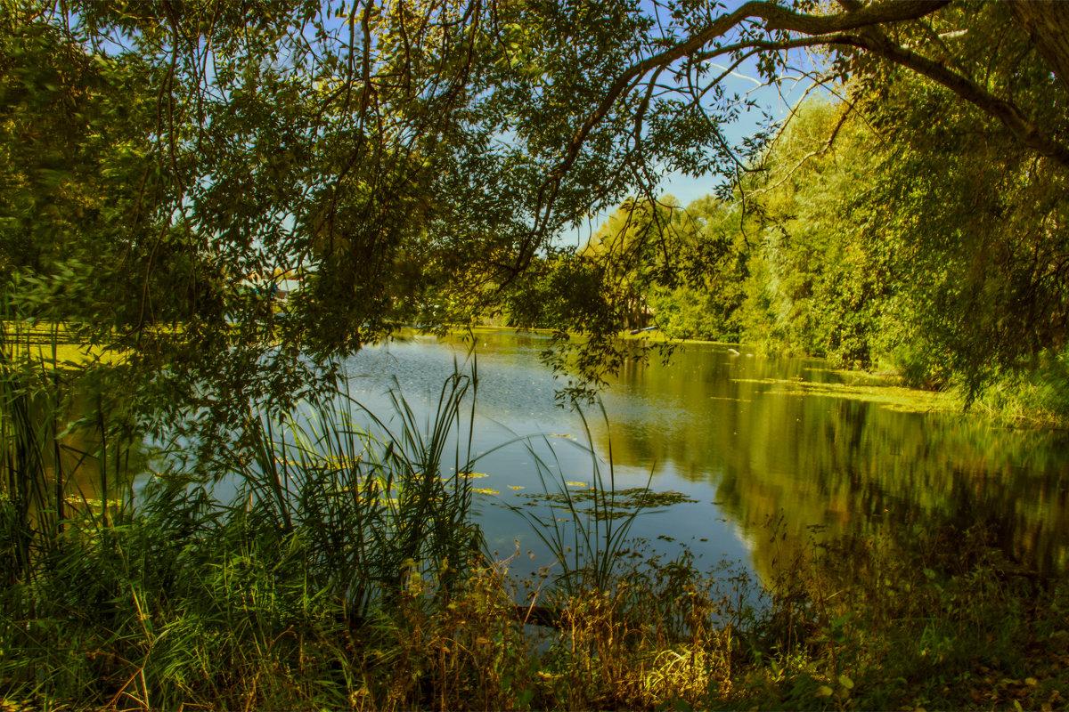 Марков пруд  сентябрь 2016 - Людмила Н