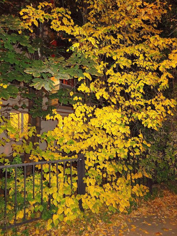 Осень, что-ли? - Андрей Лукьянов