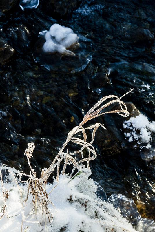 Травы. Робкие шаги зимы - Алексей (АСкет) Степанов