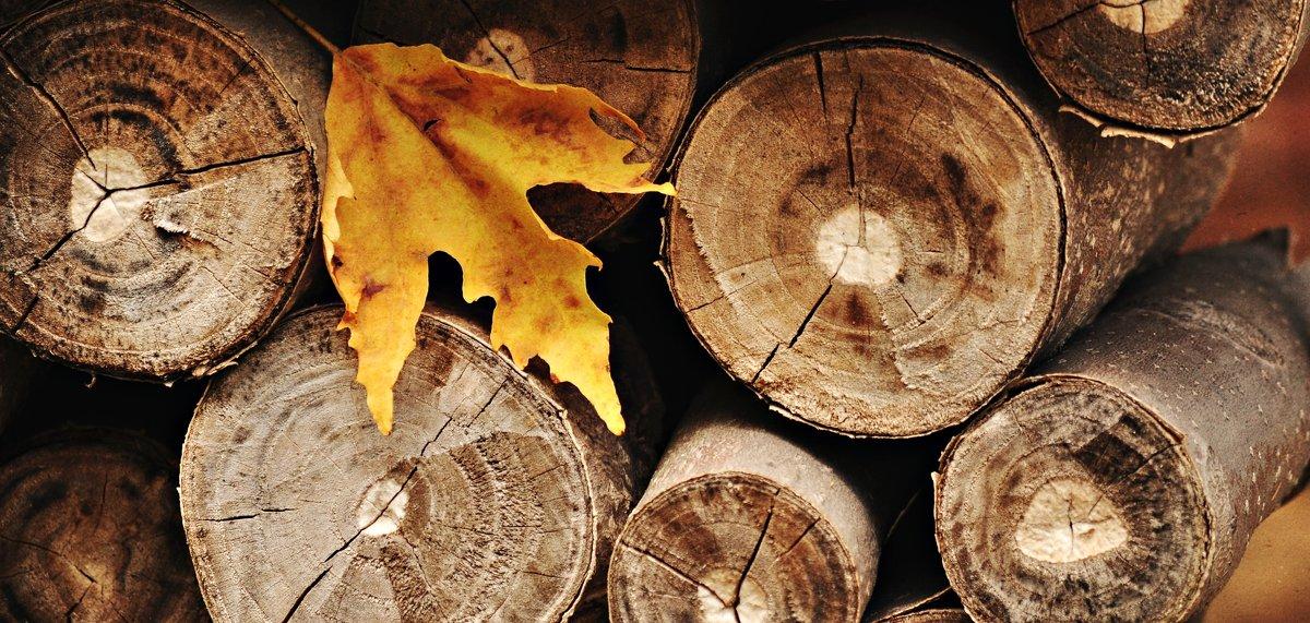 Осень - Ольга Мальцева