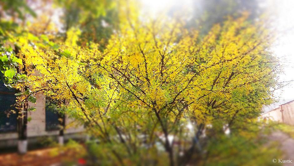 Осенние листья - Валентина Ломакина
