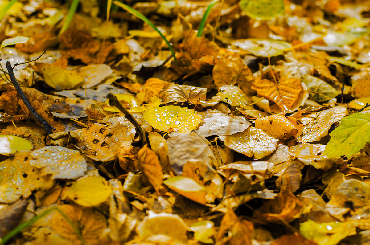 осеньняя роса - Инна