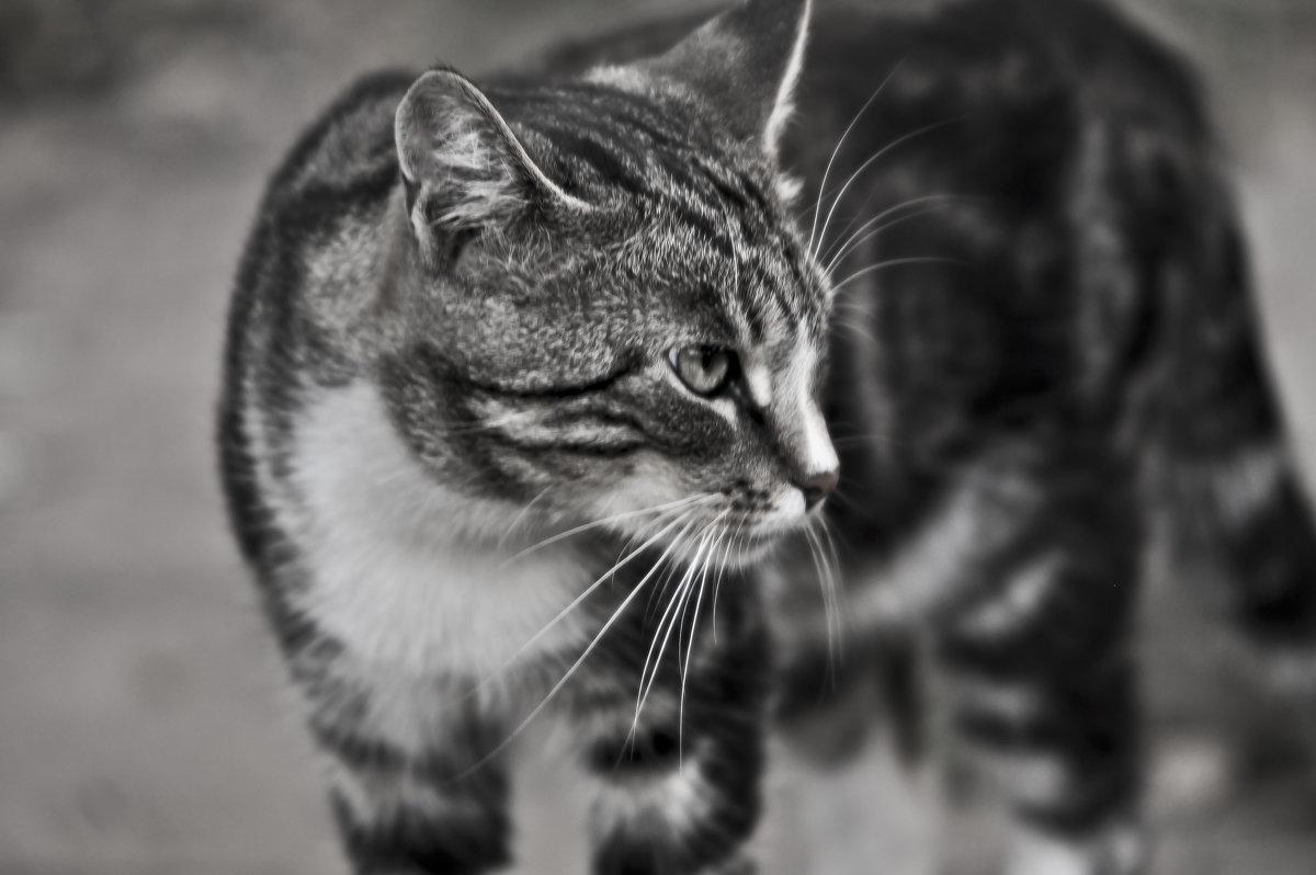 Эй, не стойте слишком близко .... Я тигренок, а не киска !!! - Ольга Винницкая