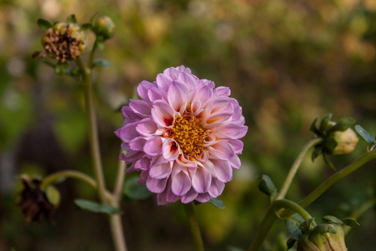 Цветок - shabof