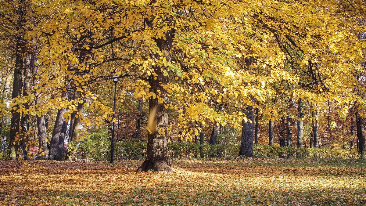 Золотая осень - Алёнка Шапран