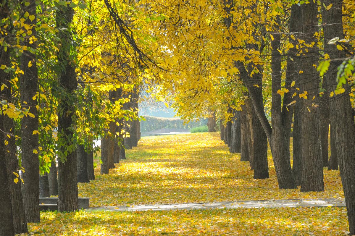 Осенняя аллея освещенная солнцем - Сергей Тагиров