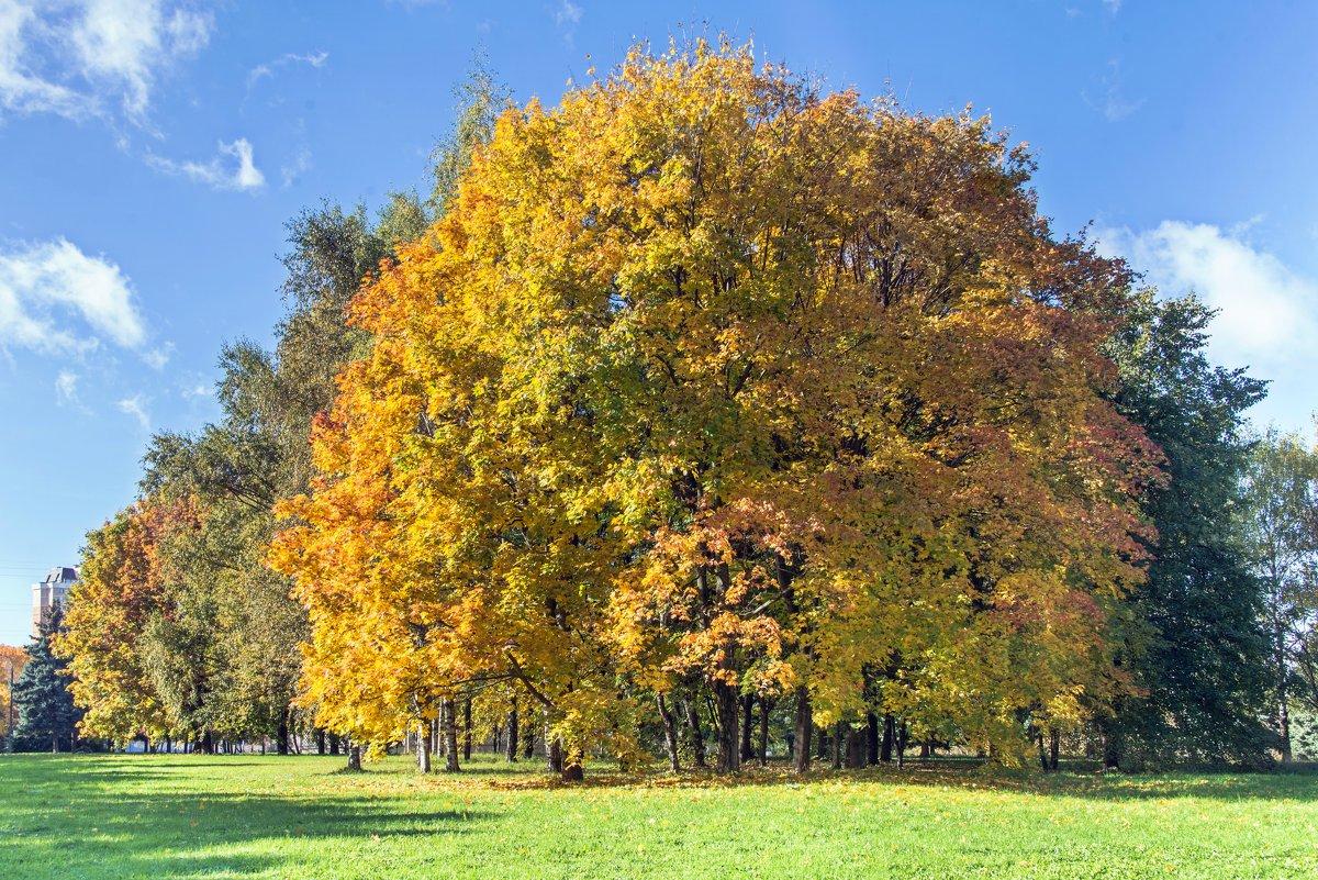 Осень ... - Kirill