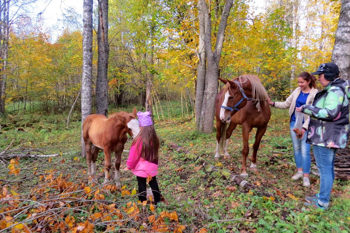 В гостях у лошадей - Светлана