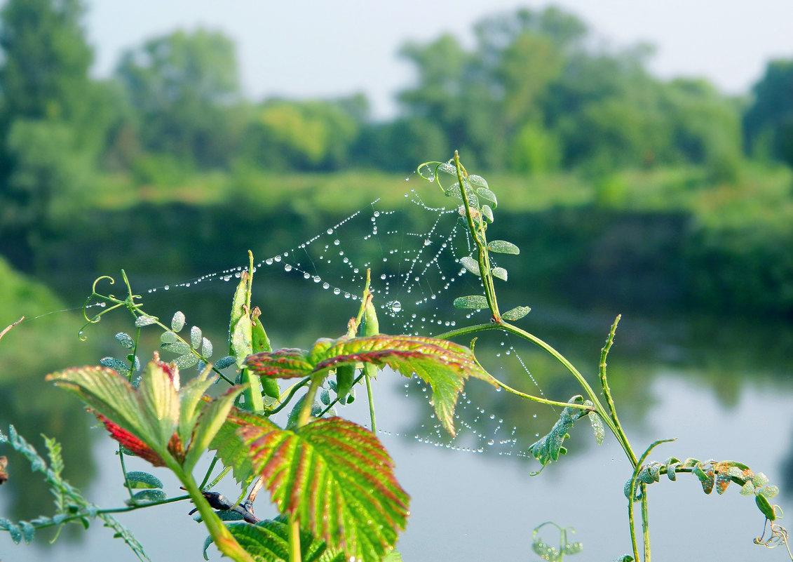 Смотрю на лето сквозь жемчужные узоры паутины. - ольга хадыкина