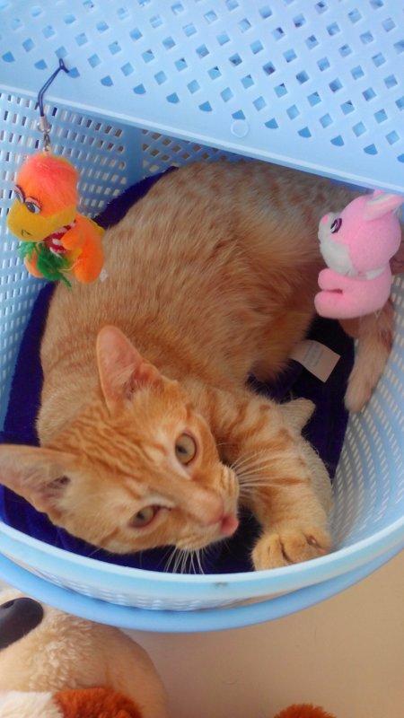 У кошек тоже есть характер))) - Татьяна Королева