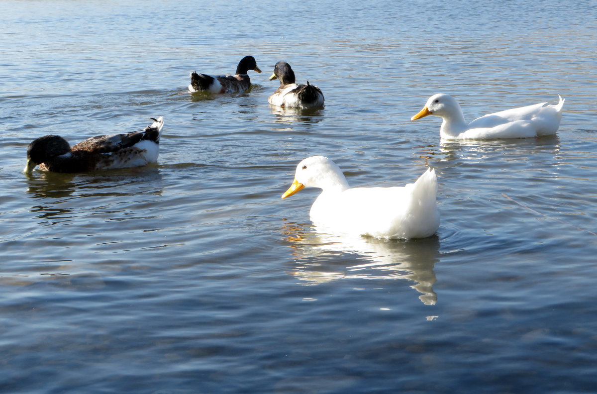 На озере - Наталья Джикидзе (Берёзина)