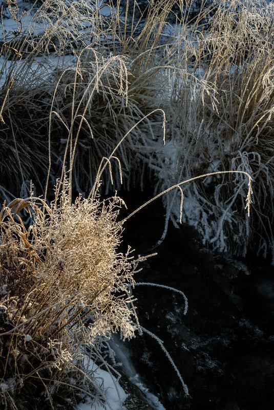 Плакучие травы Борискина ручья - Алексей (АСкет) Степанов