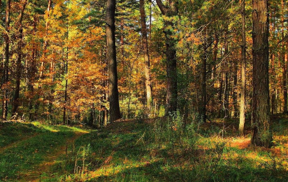 Лесов осенние рассказы... - Лесо-Вед (Баранов)
