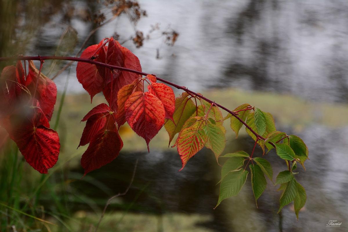 Осенняя палитра. - Paparazzi