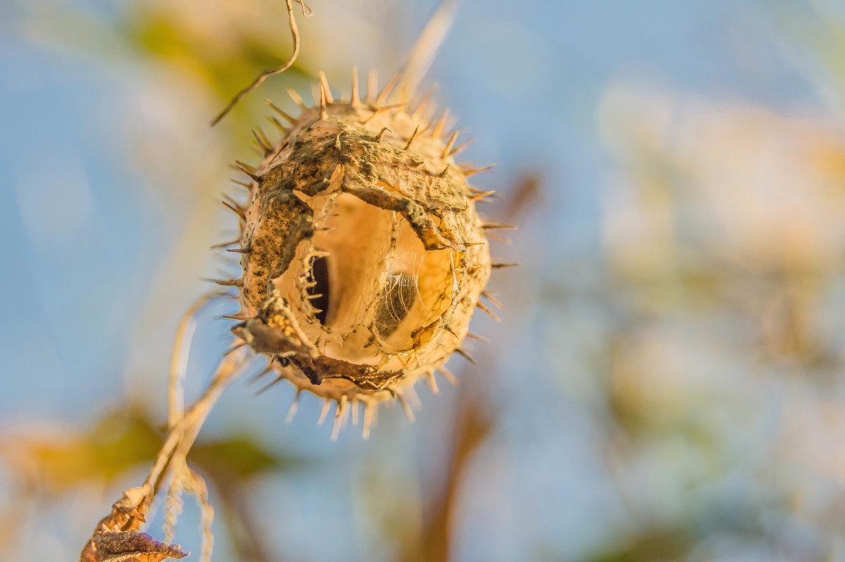 Бешеный огурец - олеся тронько