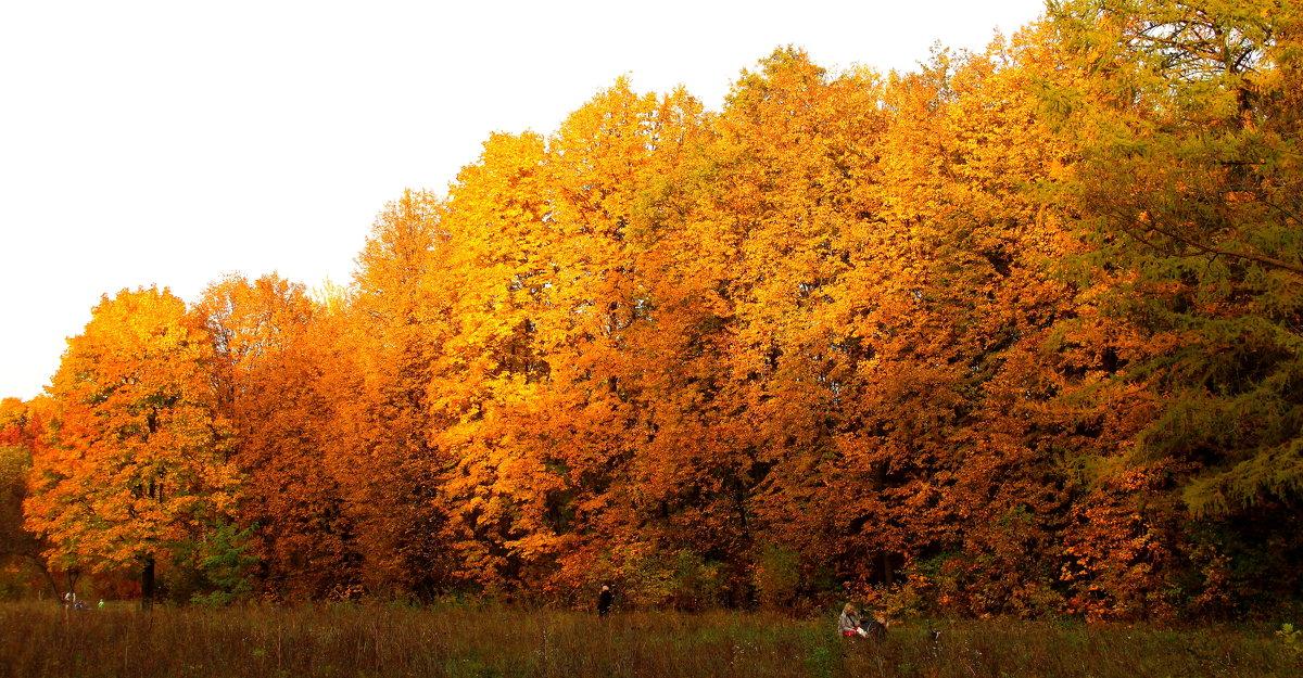 Осень в парке. - Борис Митрохин