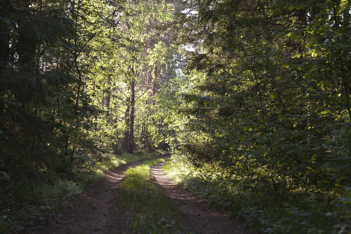 В лесу... - анна нестерова