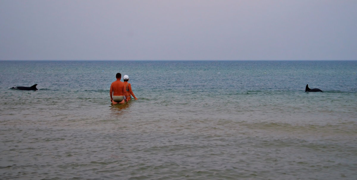 Дельфины на пляже! - Валентина Данилова