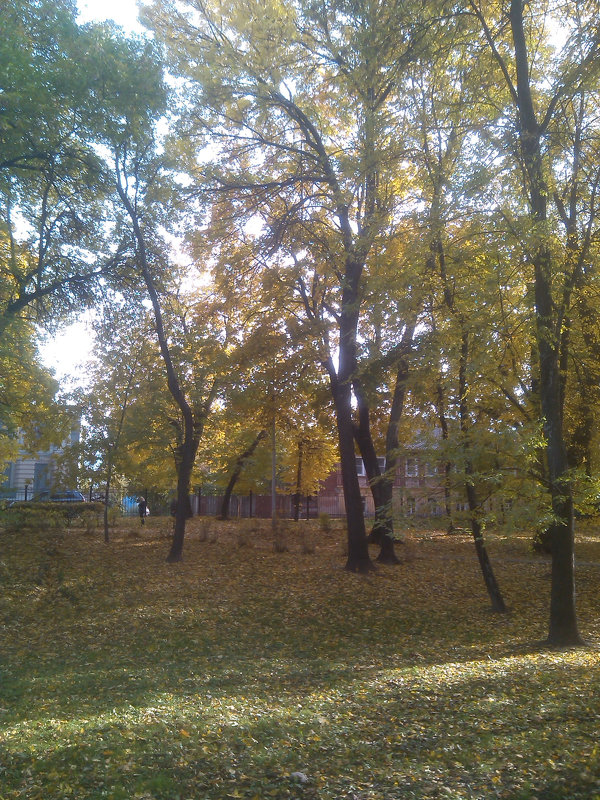 И только шелест листьев слышен - Tarka
