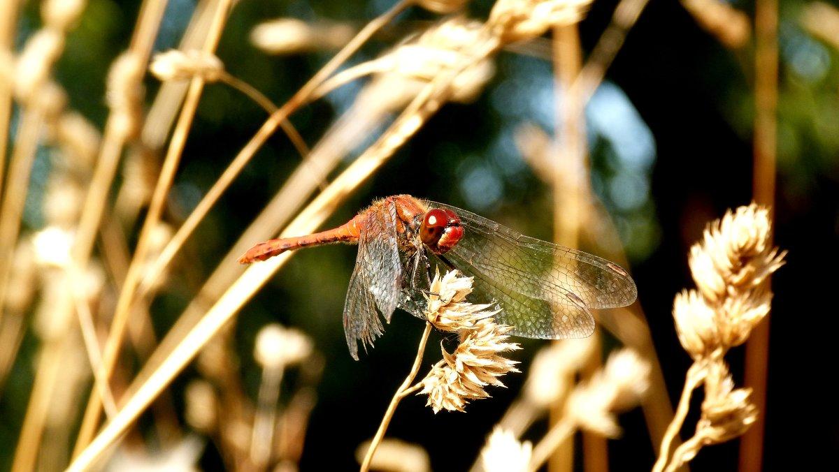 стрекозы сухой травы - Александр Прокудин