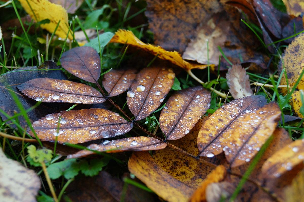 Осень пришла... - Andy Bayt