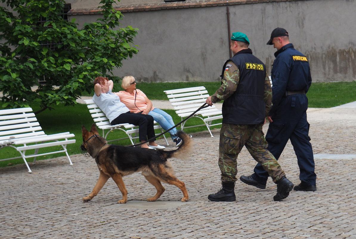 Псовод ( кинолог ) на службе - Николай Ярёменко