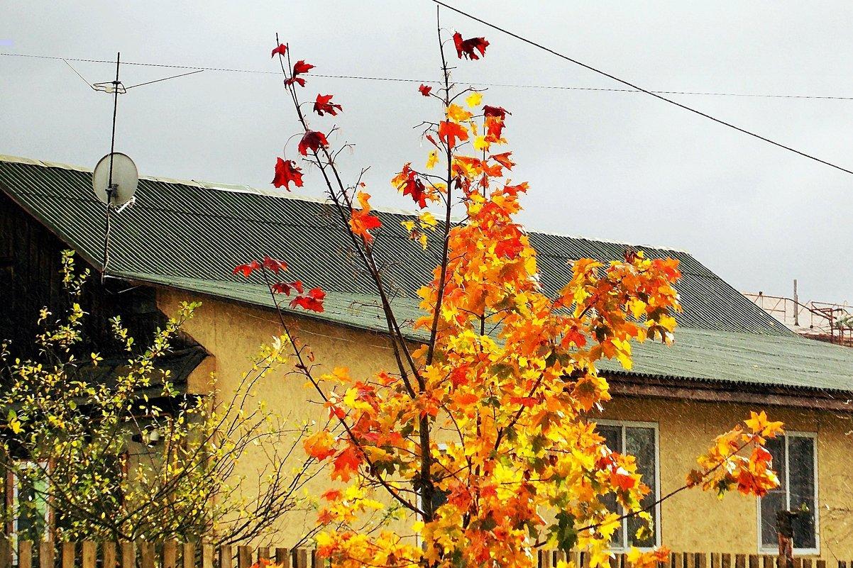 Осенний день-3 - Фотогруппа Весна.