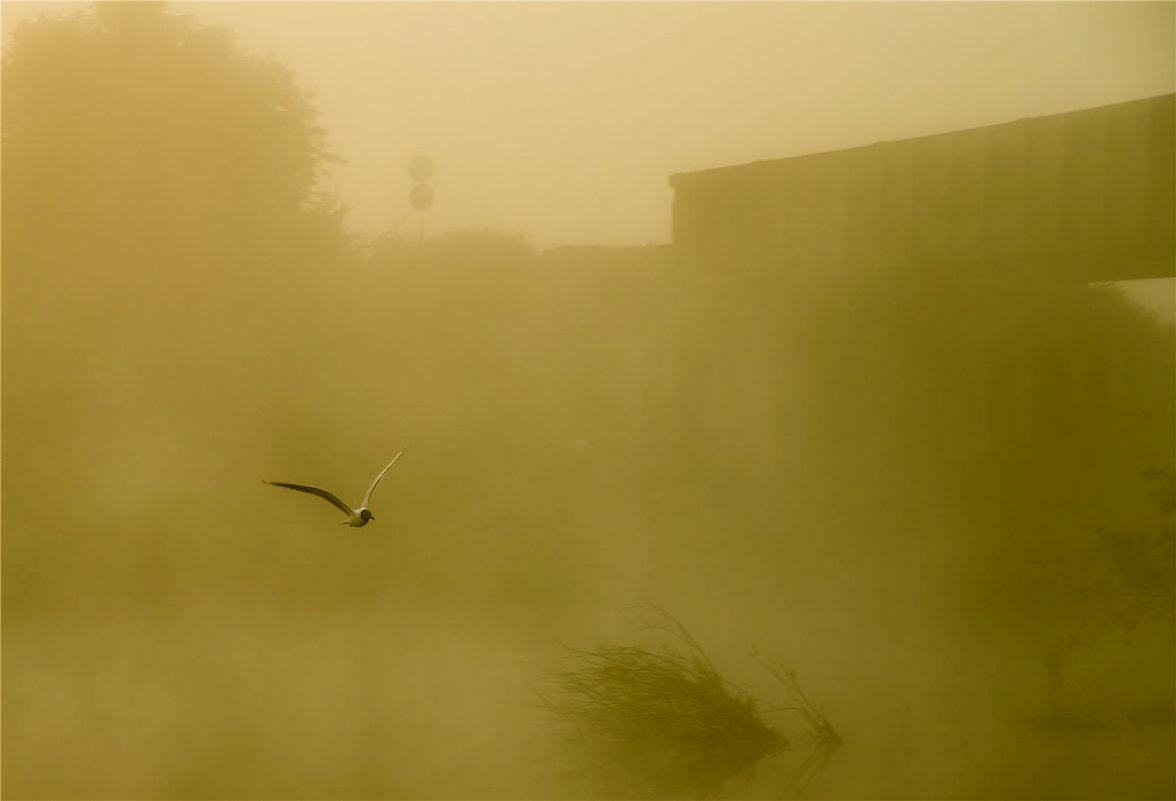 выпорхнула из тумана - cfysx