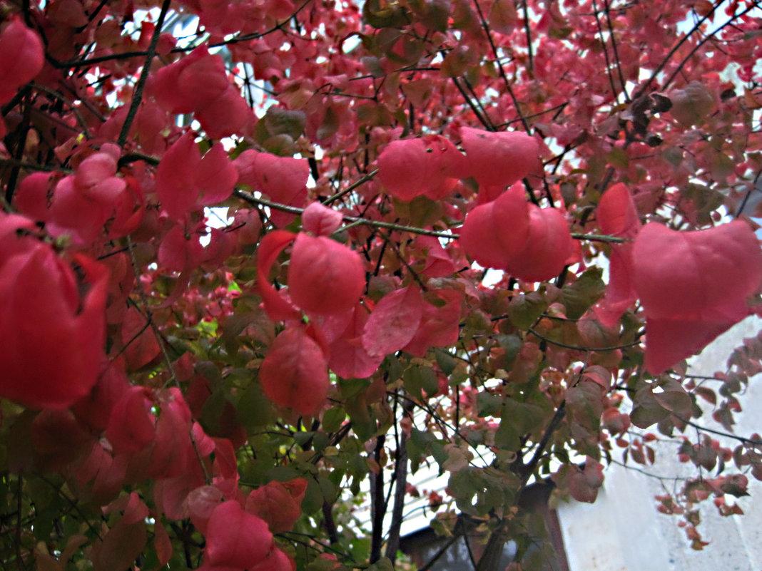 Осенние краски - Елена Семигина