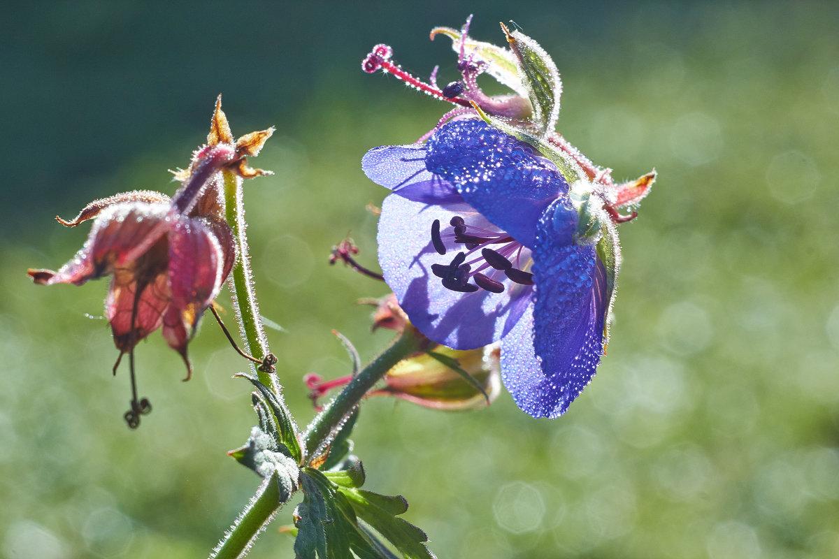 цветочек - Седа Ковтун