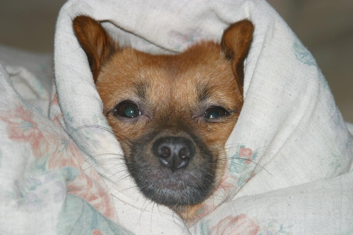 Под теплый одеялом - Любовь Потравных