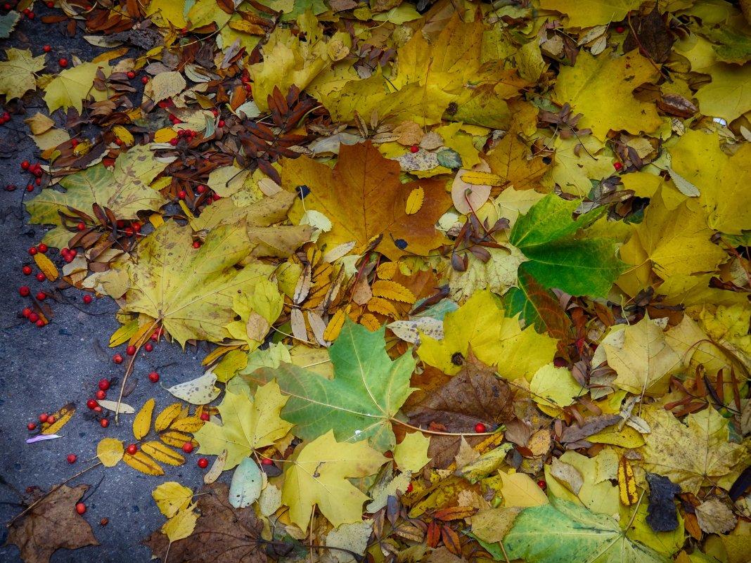 Осеннее разноцветье. - Лара ***
